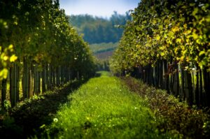 Private Custom Food and Wine Spain Tour by Magical Spain