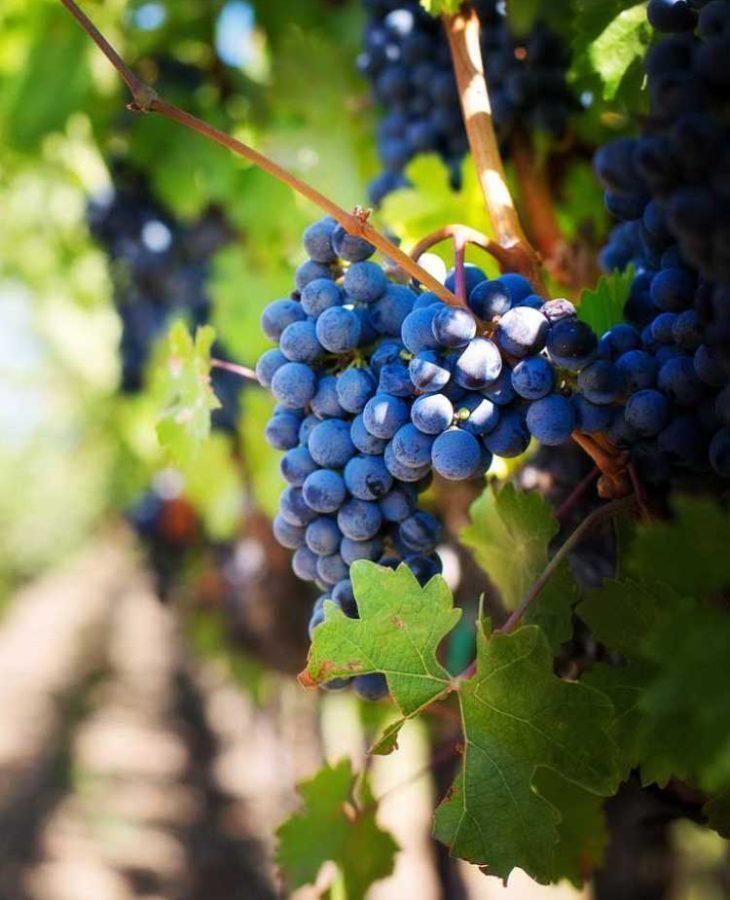 Spain_wine_5