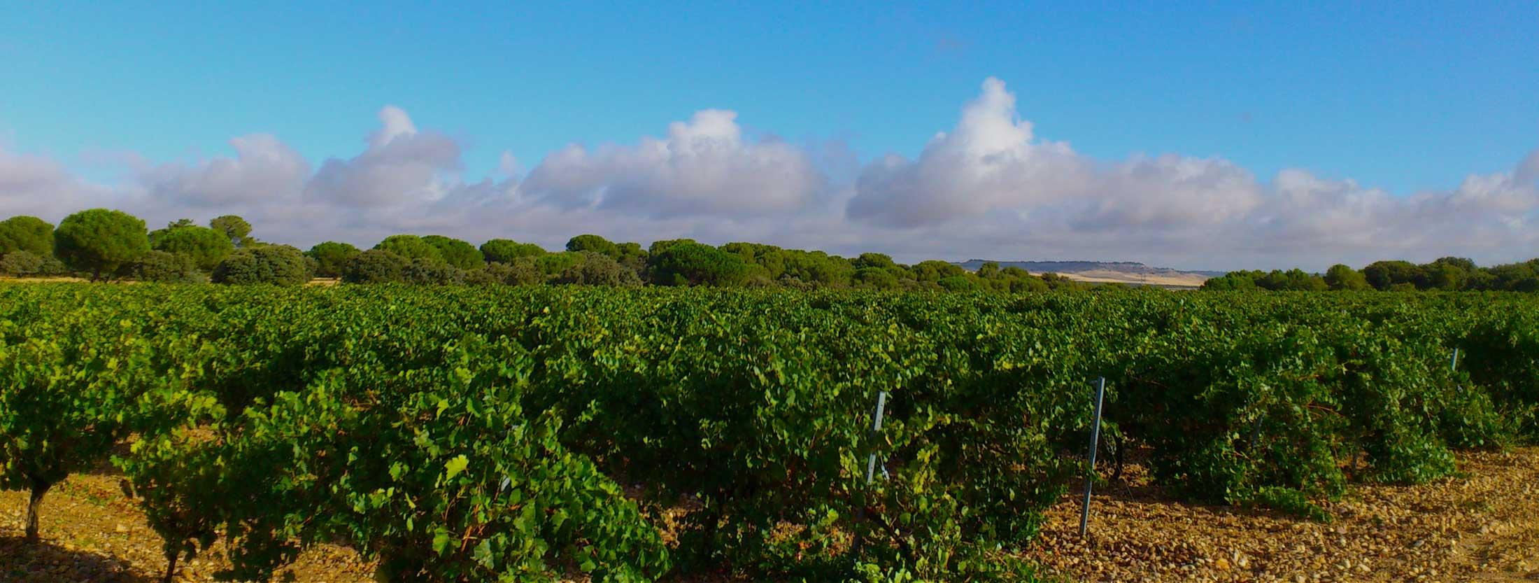 Spain Wine Regions